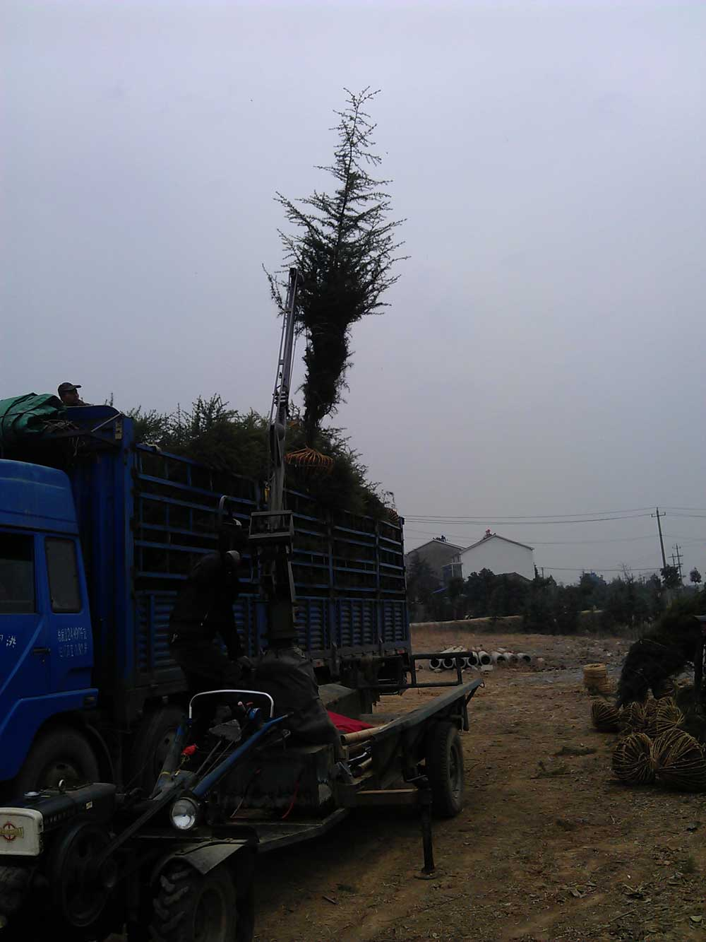 2015年第一车4米雪松发往浙江金华